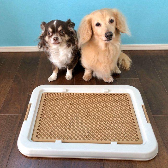 ダイソーで犬用トイレトレーを発見 実際に購入して使ってみた いぬのきもちweb Magazine 犬 ペットと暮らすインテリア 犬のスペース