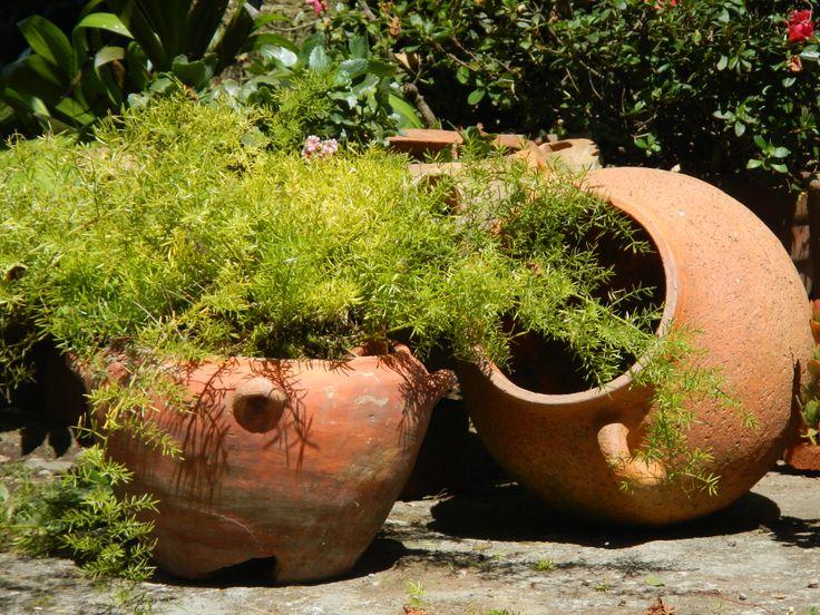 Vasijas de barro de raquira colombia tierra querida for Decoracion de jardin con ollas de barro