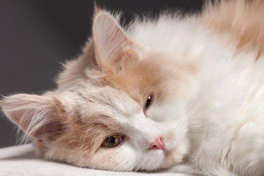 Koty specjalnej troski - kochajmy je!