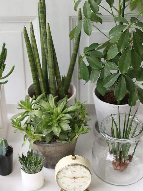 urban jungle bloggers | my gang by 23qm Stil  #urbanjunglebloggers #pflanzen #sukkulenten #plants