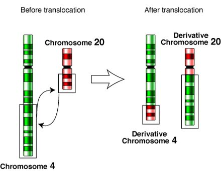 Chromosomal translocation...