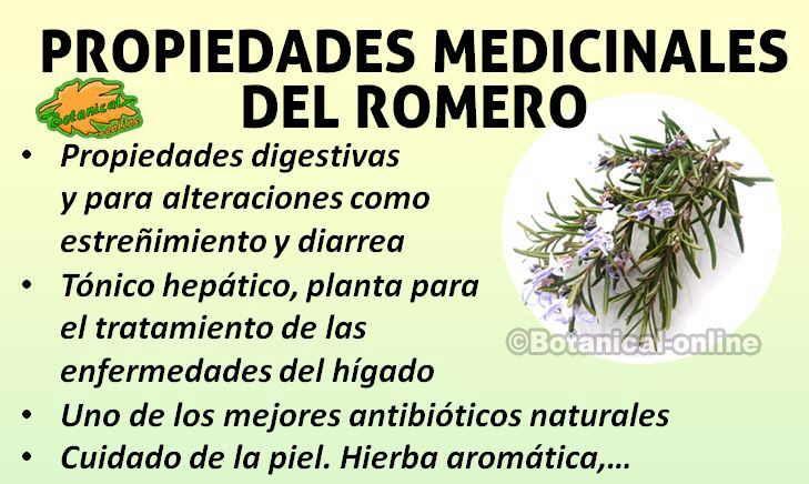 Beneficios y propiedades medicinales curativas del #romero en remedios naturales