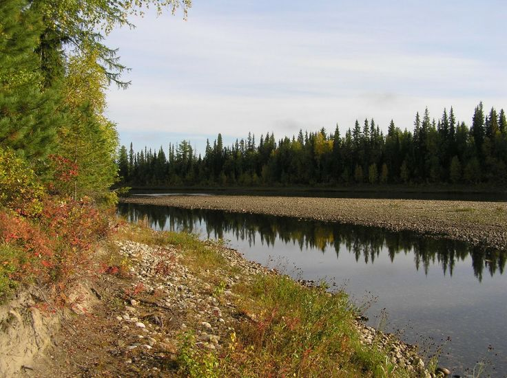 La taiga es el bosque que se desarrolla al Sur de la tundra. En ella abundan las coníferas (Picea, abetos, alerces y pinos) que son árboles que soportan las condiciones de vida -relativamente frías y extremas- de esas latitudes y altitudes, mejor que los árboles caducifolios. (Árboles cuya hoja se cae en invierno. Por ejemplo el roble, haya, olmo, tilo, arce, etc. )