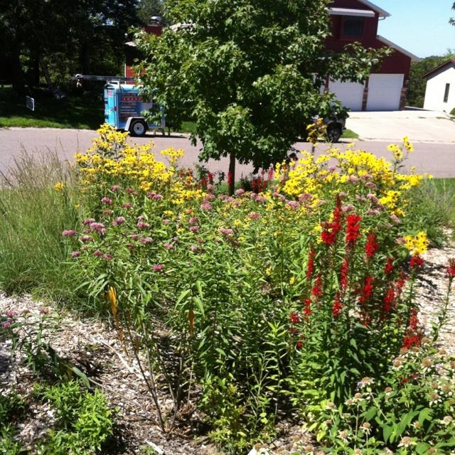 87 best Rain Gardens images on Pinterest Rain garden Garden