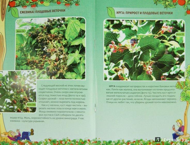Иллюстрация 1 из 1 для Как плодоносят кустарники и лианы - Николай Курдюмов | Лабиринт - книги. Источник: Лабиринт
