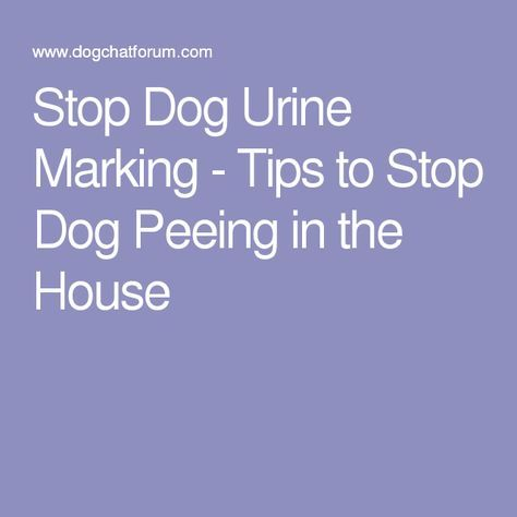 How To Get The Cat To Stop Peeing On Stuff