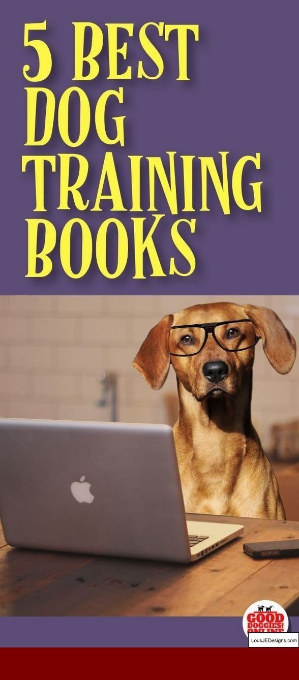How To Train A Dog To Stay Near You And Pics Of How To Train A