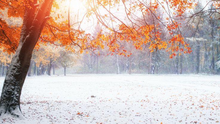 Скачать обои снег, Природа, Зима, Осень, Деревья, раздел природа в разрешении 1920x1080