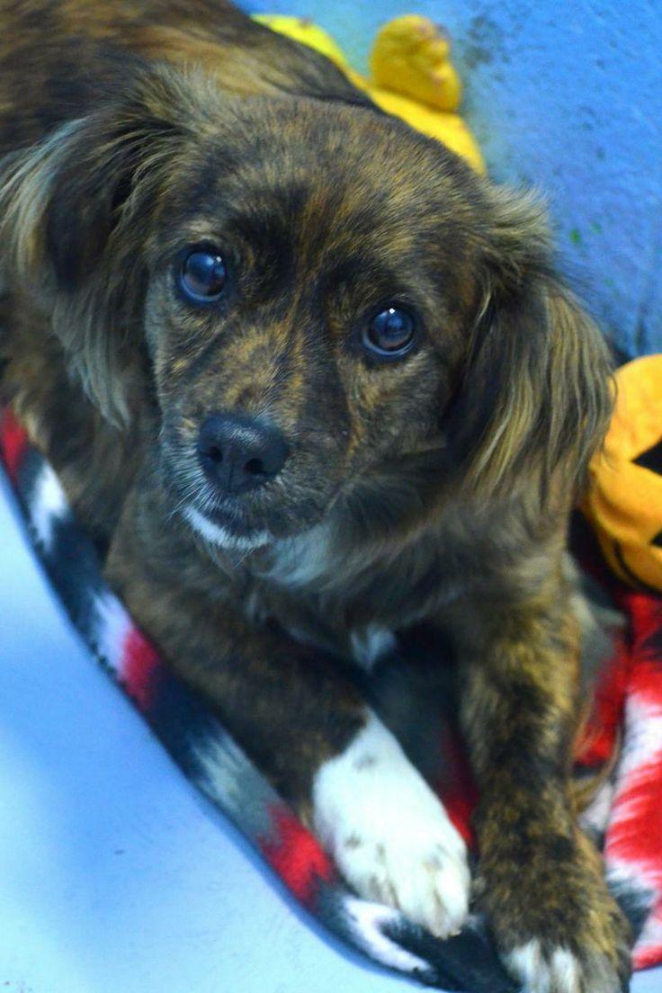 14+ North texas animal shelter ideas