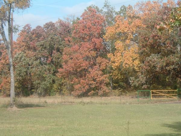 This is closer to the most color we see in Texas in the fall.
