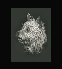 Australian Terrier -  This is the actual size of the scratch art. This size is intended as example of a memorial for an urn. Smaller work can easily be done for a pendant or jewellery.  I can work from a photo. A web site dedicated to this is planned. In the mean time I can be contacted at sue@suewalters.com #australianterrier