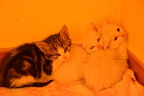 Estos son algunos de los gatitos acogidos en la protectora NUEVA VIDA