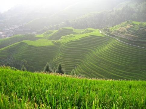 Rice paddies, China.