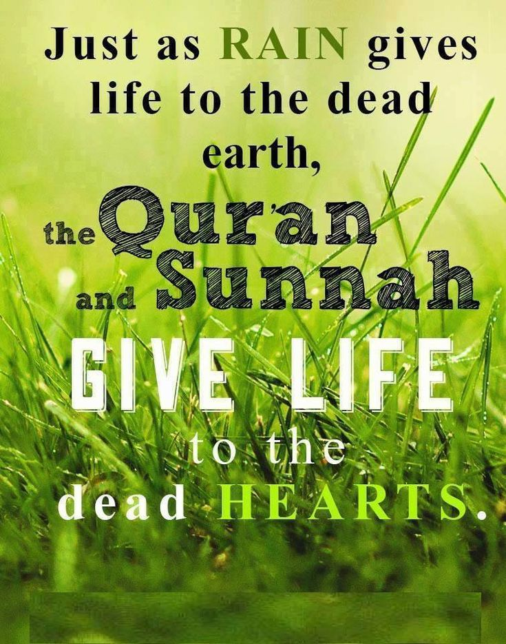 just as rain gives life to the dead earth the quran and