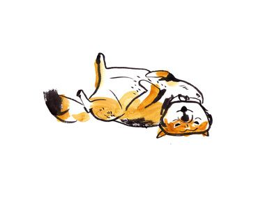 Shiba Inu illustration