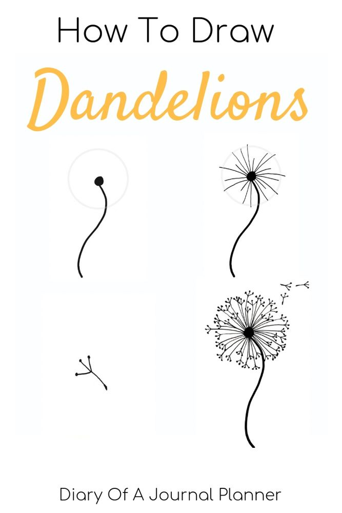 How to draw a dandelion: Easy dandelion drawing step by step tutorial – Step by Step