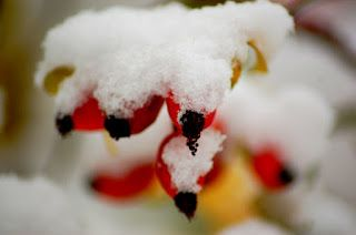Matkojeni blogi: Lunta tulvillaan on raitis talvisää. Tukholma. Winter wonderland 21.11.