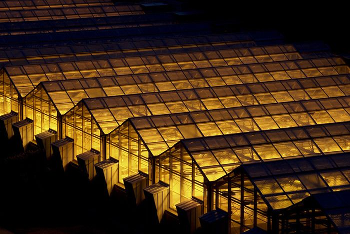 Greenhouses at night