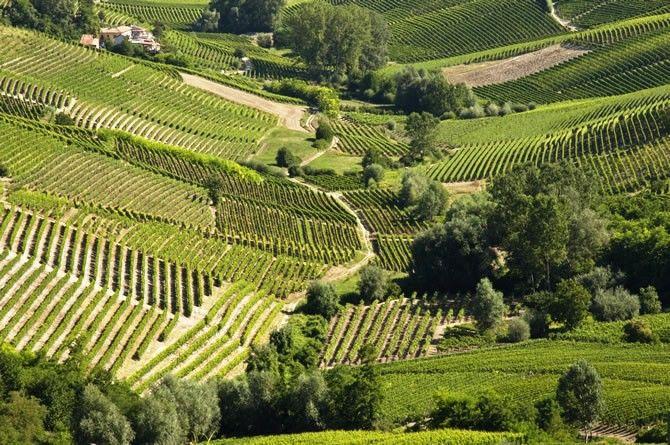 Incredible vinyeard landscape, from the trails taken during the Trail del Moscato races, in the Asti and Moscato wine zone   Sentieri e strade del Trail del Moscato #Piemonte #Piedmont #Italy