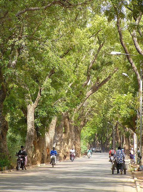 Lovely tree-lined avenue in Ouagadougou,Kadiogo,Burkina Faso. #streettrees #urbanforestry | Via Flickr, photo credit: Jeff Attaway
