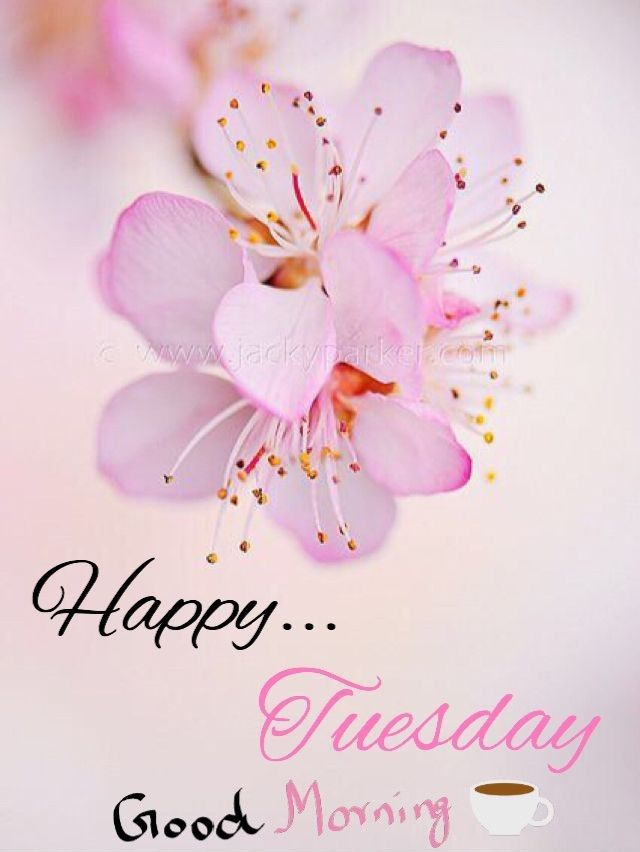 Tuesday | Good morning | Bach flowers, Flowers, Good ...