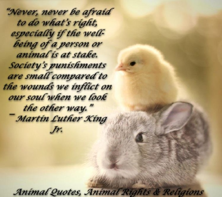 Pinterest Animal Quotes: 97 Best Vegetarian Quotes Images On Pinterest