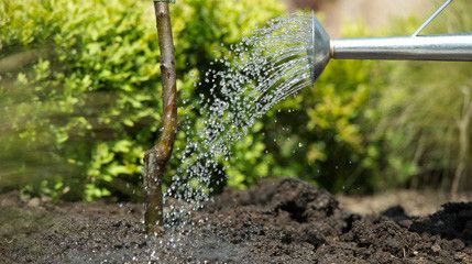 In October trees (including fruit trees), hedges, shrubs and climbers, ensure they are well watered and check regularly to see they do not become loose.