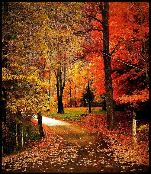 God's love in all its glorious autumn splendor! – Rukiye Hatunoğlu