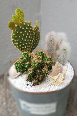 DIY Anleitung für den Sommer vom Blumenmann Sommer Deko Idee mit Kakteen zum selber machen. Pflegeleichte Deko Idee