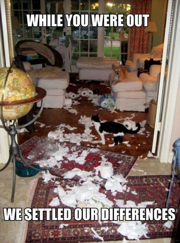 40 Funny Animal Memes - You may have settled your differences, but we need to talk. Time for the vacuum, broom and probably some Febreeze and back to the store for toilet paper and paper towels. ...