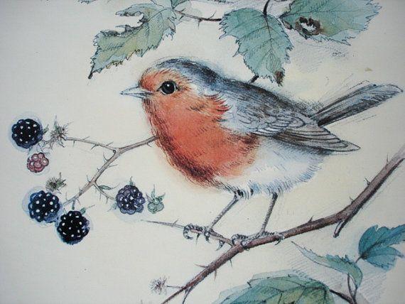 robin pencil drawing - Google Search