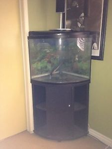 40 Gallon Odyssea Bow Front Glass Aquarium Fish Tank with Stand Corner