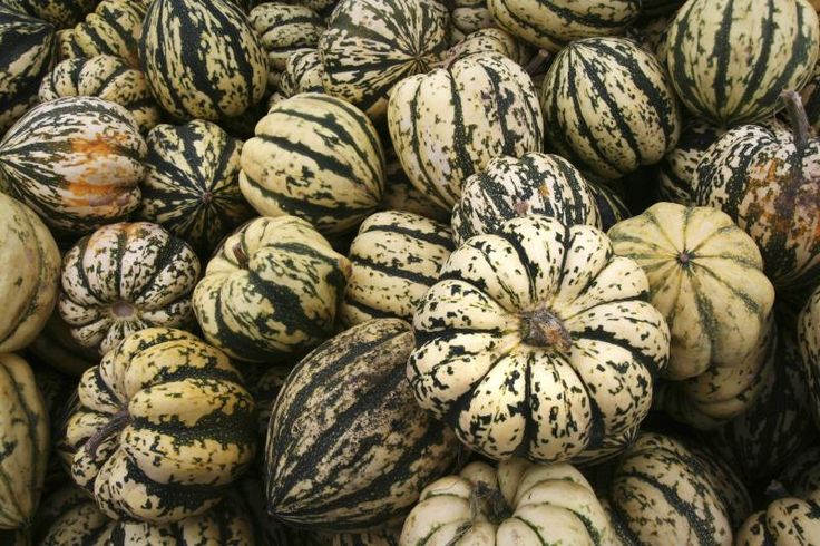 The Nutritional Values of Delicata Squash