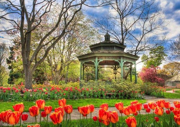 Tulipes et kiosque à musique