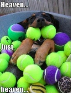 Pets, Daisies, Dogs Heavens, Dreams Come True, Happy Dogs, Ball Pit, Tennis Ball, Happy Puppies, Animal