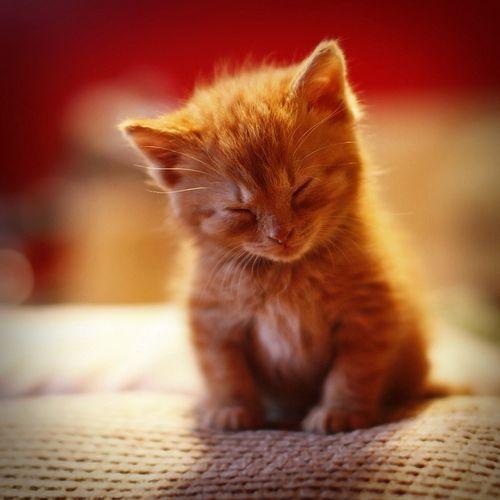 Gattino assonnato