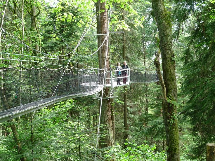 Greenheart TreeWalk is tucked away in the UBC Botanical Gardens. The Greenheart TreeWalk allows explorers to walk across suspended walkways and tree platforms, giving them a birds-eye view of the magical rainforest.