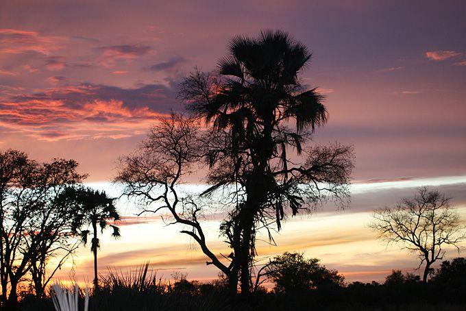 Botswana Migration Routes Safari: Botswana Migration Routes Safari:  Nach Ankunft in Maun wurden wir vom Reiseleiter, Emanuel, empfangen und den anderen Reiseteilnehmern vorgestellt, die auch die Campingsafari «Migration Routes» machen. Wir sind gespannt und voller Vorfreude auf die nächsten 9 Safaritage: «Botswana wir kommen»!