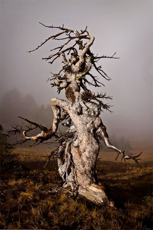"Gnarled Goddess - Crater Lake National Park <div id=""fb-root""></div><script>(function(d, s, id) {  var js, fjs = d.getElementsByTagName(s)[0];  if (d.getElementById(id)) return;  js = d.createElement(s); js.id = id;  js.src = ""//connect.facebook.net/en_US/sdk.js#xfbml=1&version=v2.3"";  fjs.parentNode.insertBefore(js, fjs);}(document, 'script', 'facebook-jssdk'));</script><div class=""fb-video"" data-allowfullscreen=""1""…"