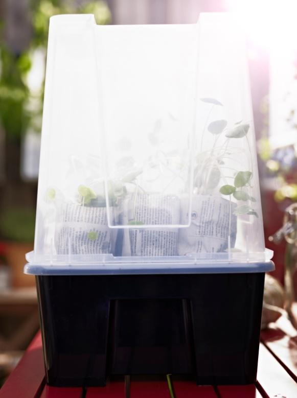 Use old toilet paper rolls to start seed- lings in a clear plastic SAMLA box green- house. | In IKEA Jordan: http://www.ikea.com/jo/en/catalog/products/S79850875/ | JD 5