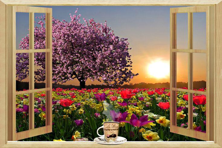 Wiosna, Tulipany, Kwitnące, Drzewo, Wschód Słońca, Okno
