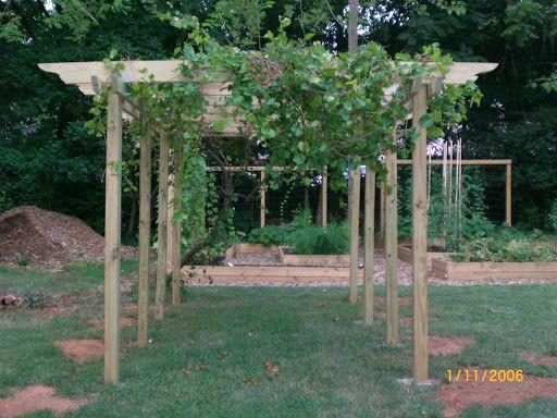 17 Best Ideas About Grape Arbor On Pinterest Garden