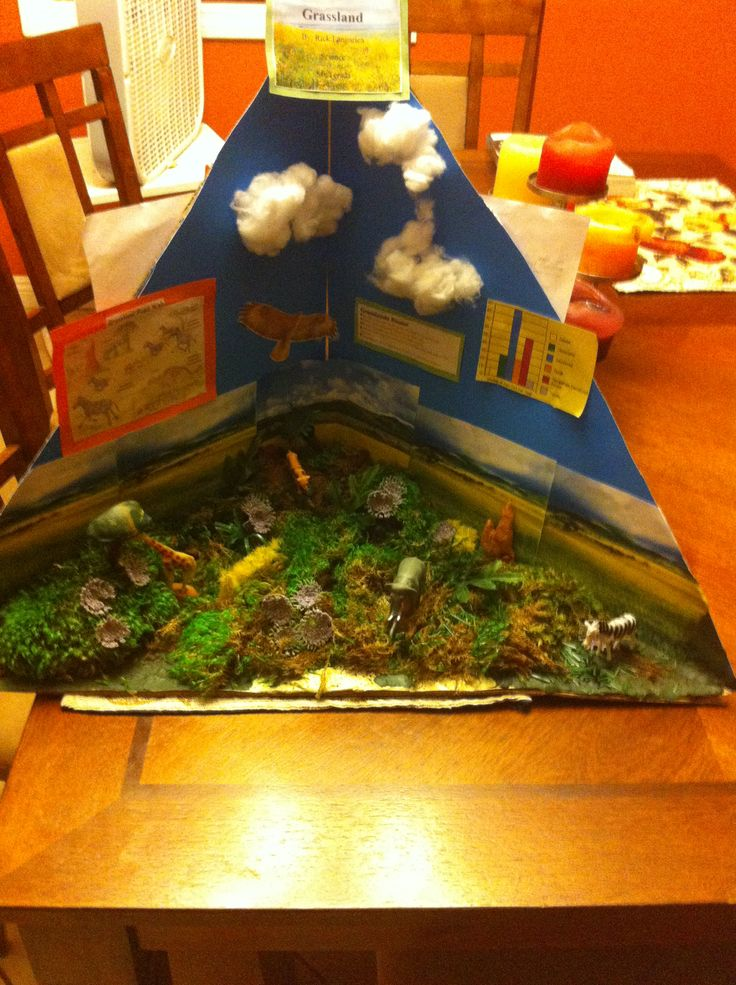 Grassland biome for 3rd grade School Projects