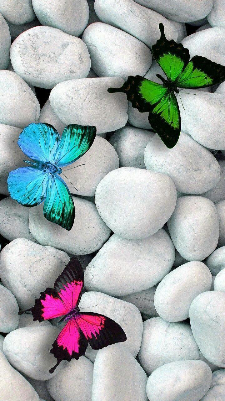 Download Butterflies Beauty Wallpaper By Carlaaltumtimaltum 24 Free On Zedge Wallpaper Nature Flowers Cool Backgrounds For Iphone Pretty Wallpaper Iphone Cute photography zedge wallpaper