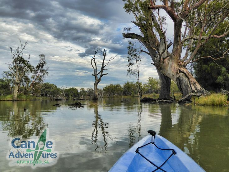 Exploring the wetlands of the Murray River and its wetlands in South Australia.  Canoe Hire and Guided Tours are our speciality.  www.canoeadventure.com.au