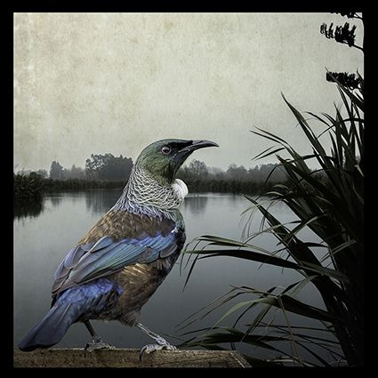 Tui Territory by keen wildlife photographer, Clive Collins. Available as canvas and paper artprints from www.imagevault.co.nz