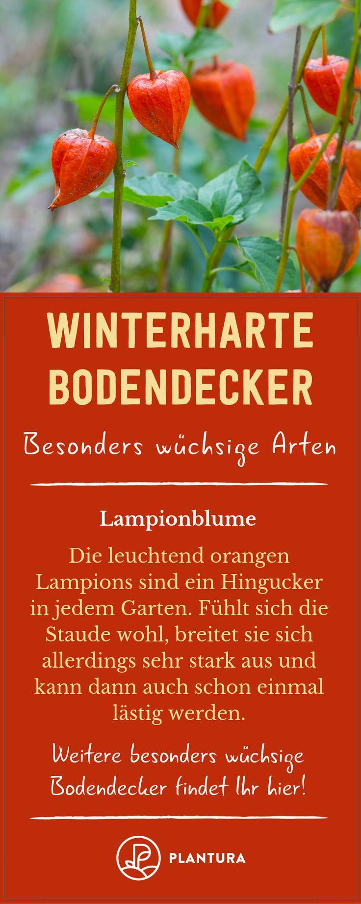 Winterharte Bodendecker: Robuste, schöne & wüchsige Sorten – Plantura | Garten Ideen & Tipps | Gemüse, Obst, Kräuter