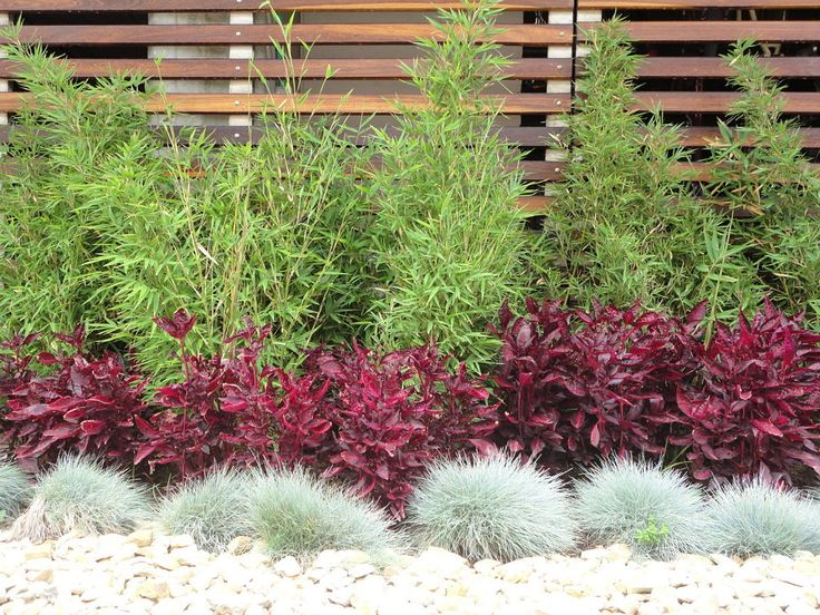 arbustos enanos para jardin buscar con google jard n