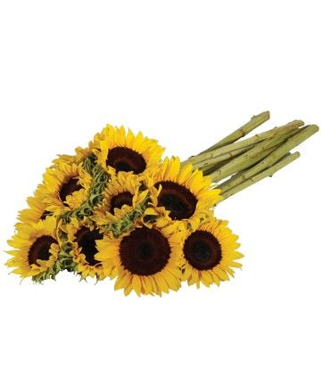 Royer's flowers and gifts: Sunflowers - Flowers, Plants, Gift Basket Delivery for all occasions at royers.com