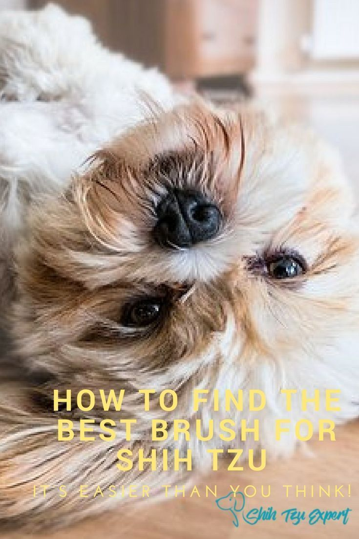 When Brushing A Shih Tzu Why You Should Be Concerned About Mats